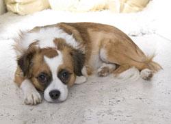 Manuelas Hund :)